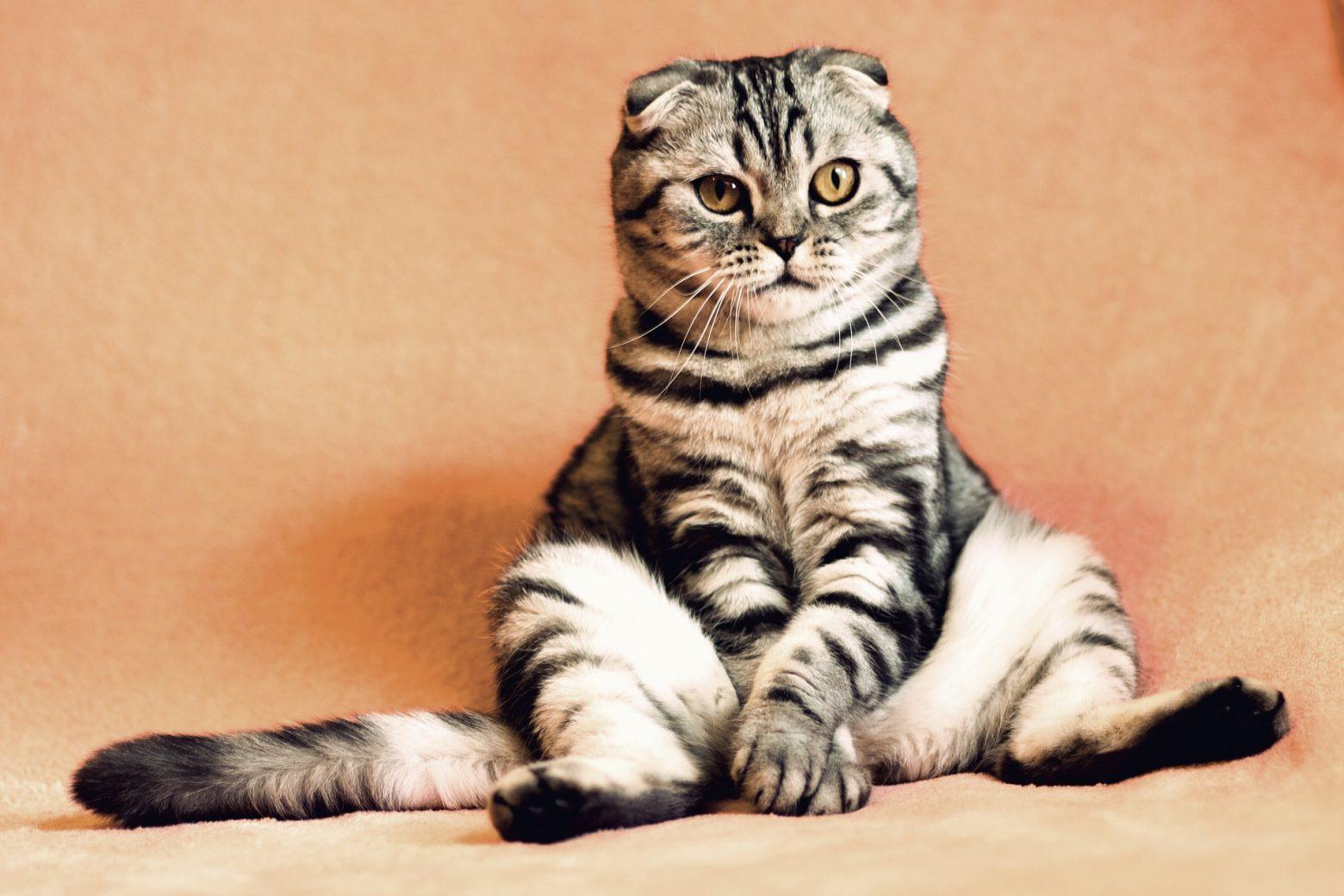 O Que os Gatos Tem a Dizer? Idioma Felino Funciona? – PDF