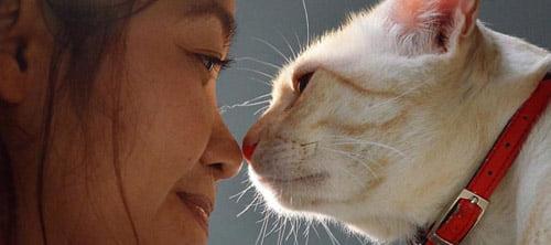 Silvia Komatsu Criadora do Curso Idioma Felino