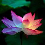 Instituto Saber Consciente Cursos: Terapeuta Holístico com Certificado
